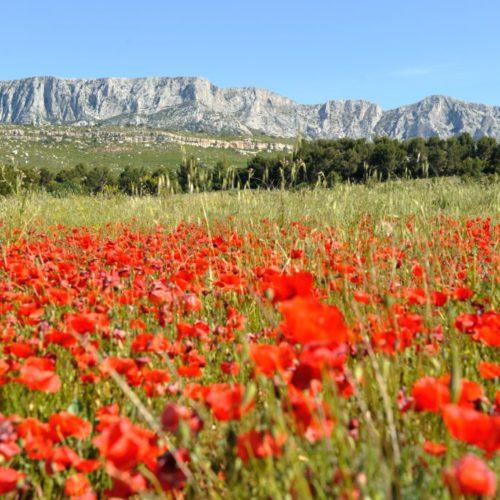Montagne Ste Victoire cr+®dit Cintas Floresprovence region