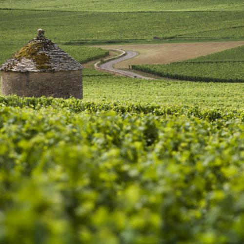 Vignoble Savigny les Beaunes