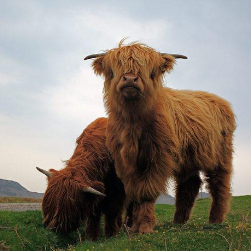 inverness highland whisky tour 2b